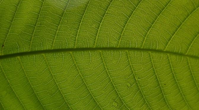 La diversité microbienne sur les feuilles tropicales
